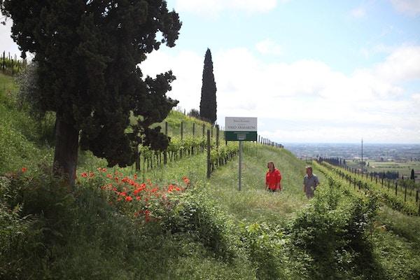 Vin vandring valpolicella amarone 1