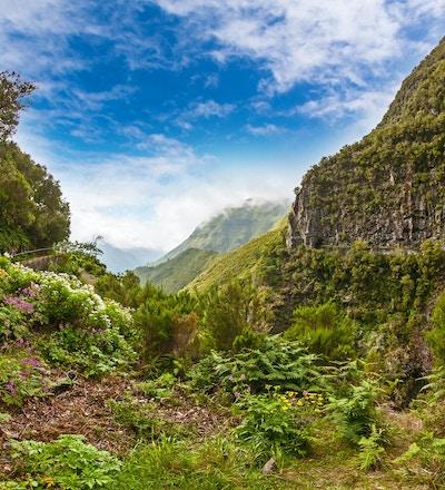 """Vackert landskap på ön Madeira med stig nära """"Levada"""" till vattenfallet"""