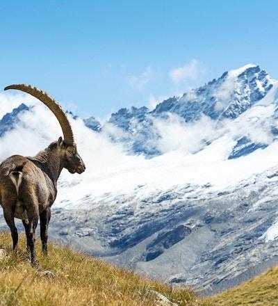 Lös sten i de italienska fjällängarna. Gran Paradiso nationalpark, Italien