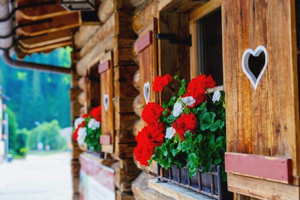 Typiska bayerska eller österrikiska träfönster med röda pelargonblommor på hus i Österrike eller Tyskland.