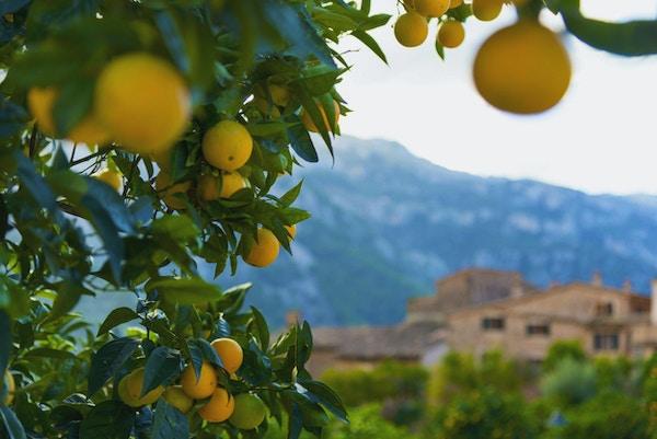 Typisk sikt i den berömda byn Fornalutx nära Soller. På Mallorca, Spanien.