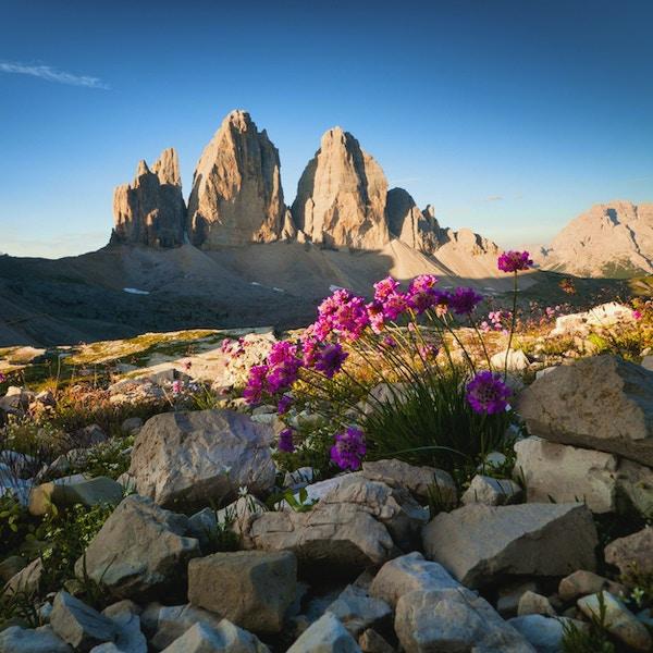 """Tre Cime di Lavaredo och vilda blommor (Dolomiterna, Italien) Fler bilder om Dolomiterna"""