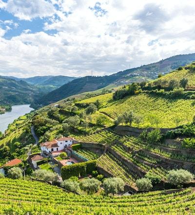 Vinodlingar och landskap i Douro-regionen i Portugal