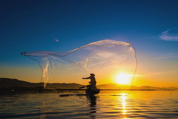 Fiskar i aktion under morgonfiske, Vietnam.