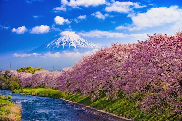 Mt. Fuji, Japan och floden på våren.