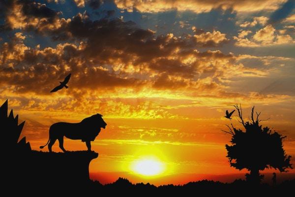 Djungel med berg, gammalt träd, fågellejon och meerkat på guld- molnig solnedgångbakgrund