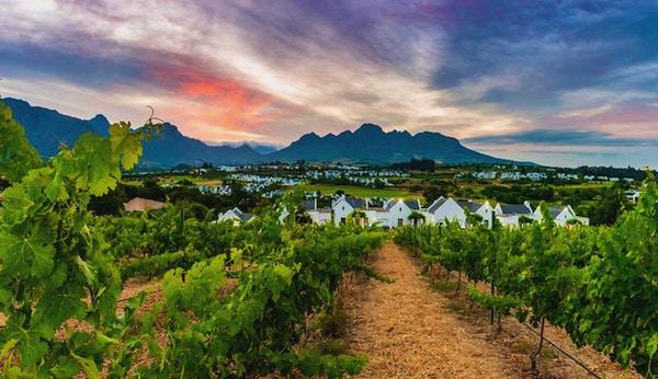 Vinrankor på vingård precis utanför Stellenbosch, berg, solnedgång, Stellenbosch, Sydafrika
