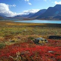 Röda och gula buskar prickar med livfulla färger i den arktiska dalen och sjöarna som kramar bergets bas, i svenska Lappland (nära Alesjaure-sjön).