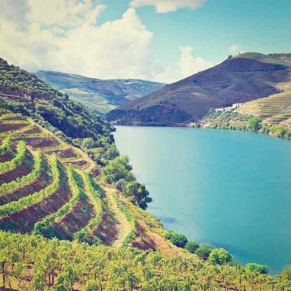 Vingårdar i dalen av floden Douro, Portugal, retro effekt