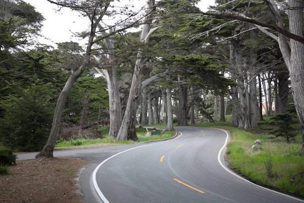 Sikt av den natursköna vägen 17 Mile Drive som passerar genom cypresser längs Pacific Grove och Pebble Beach, Kalifornien