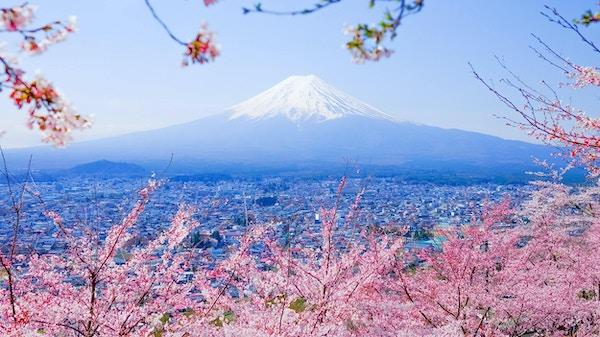 Mt. Fuji With Cherry Blossom (Sakura) på våren, Fujiyoshida, JapanMt Fuji and Cherry Blossom in Japan Spring Season (Japanese Call Sakura) Selective Focus