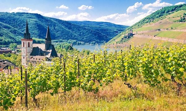 Utsikt över Rieslings vingårdar nära Bingen med sevärdheterna Mäuseturm, Rheinknie och Burg Ehrenfels