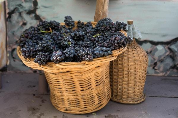 klasar röda druvor i en flätad korg och carboy