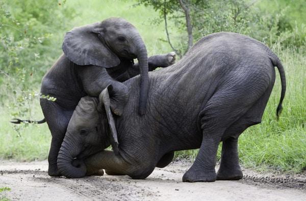 Safari sydafrika e15422835168481