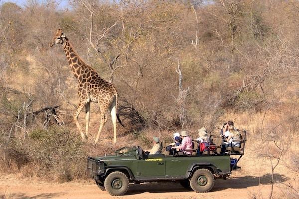 Safaribil Makutsi