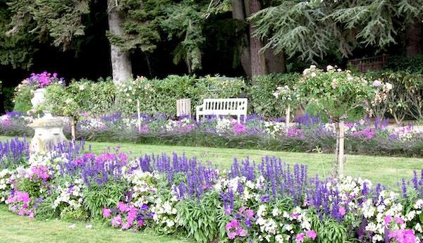 Vacker fransk trädgård i Loire River Valley med tonvikt på färgen lila