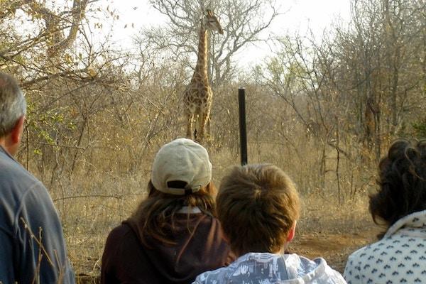 Giraff vanding