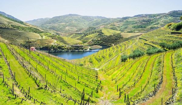 Vingårdar och landskap av floden Douro, Portugal
