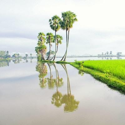 Mekong-deltaet i södra Vietnam är en enorm labyrint av floder, träsk och öar, hem för flytande marknader, pagoder och byar omgiven av risfält. Båtar är det viktigaste transportmedlet, och turer i regionen startar ofta i närliggande Ho Chi Minh-staden (tidigare känd som Saigon) eller Can Tho, en livlig stad i hjärtat av deltaet.