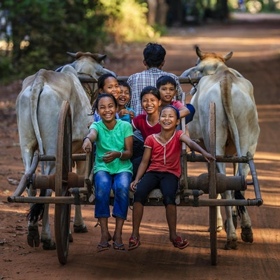 Grupp lyckliga kambodjanska barn som rider oxvagn i byn nära Siem Reap, Kambodja