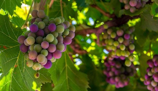 Istock 470600115 loire frankrike vin