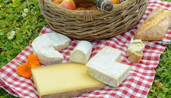 flera franska ost med äpplen och cider på gräset