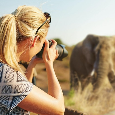 Beskuren bild av en kvinnlig turist som tar fotografier av elefanter på safarihttp: //195.154.178.81/DATA/i_collage/pi/shoots/806259.jpg