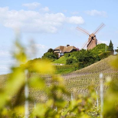 """""""Tvärs över champagnevingårdarna till den berömda väderkvarnen Verzenay som byggdes 1818. på den kulle som kallas Mont Boeuf. Detta historiska monument, som nu ägs av GH Mumm champagneshus, omges av Grand Cru champagne druv vinodlingar som gör den finaste champagnen och ligger i Montagne de Reims regionalpark nära Reims. På hög mark fungerade väderkvarnen som en observationspostutkik under första och andra världskriget. Bra kopieringsutrymme. """""""