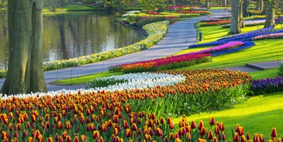 Färgrika tulpaner längs ett damm i en park. Platsen är Keukenhof Gardens, Nederländerna