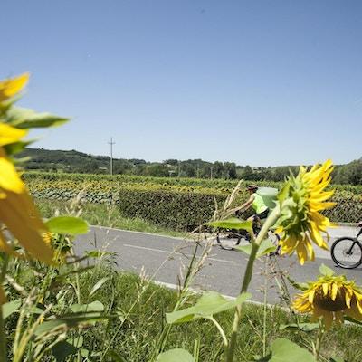 Slovenien cykel 4
