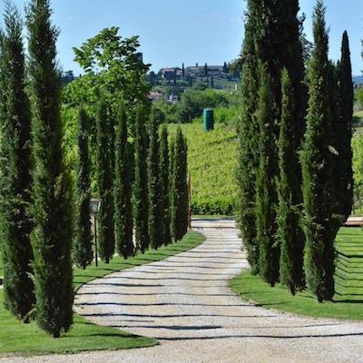 Italien veneto vin 2