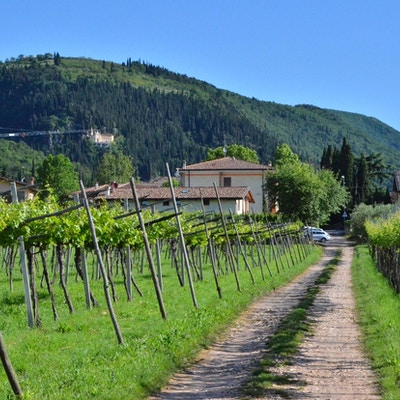 Italien veneto vin 3
