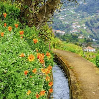 Liten flod på färgglada Madeira